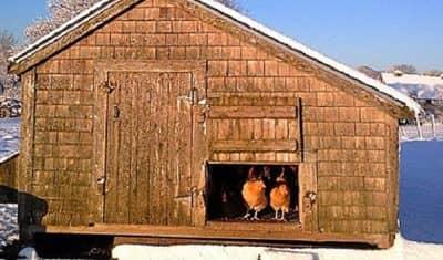 Erect-Your-Chicken-Coop