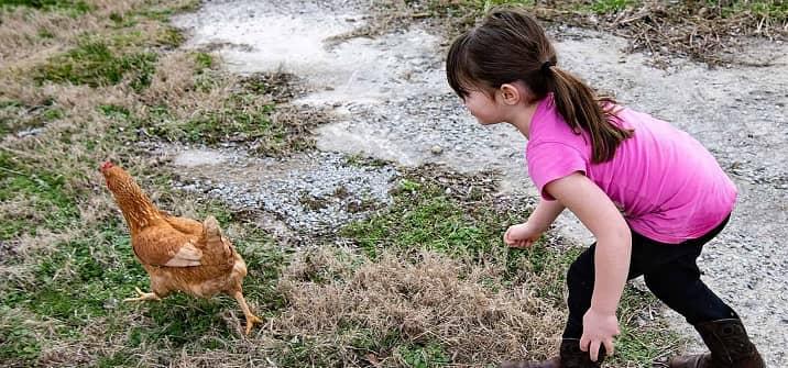 Catch a Chicken