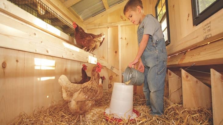Chicken Coop Without