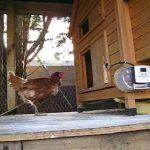 How to Build a Chicken Coop Door
