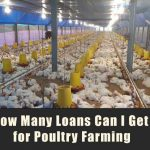 How Many Loans Can I Get for Poultry Farming