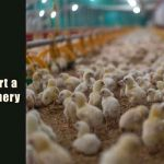 How to Start a Poultry Hatchery